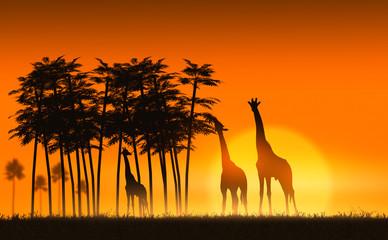 giraffes in Africa at sunset