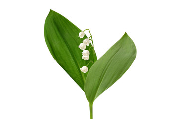 Foto op Textielframe Lelietje van dalen Lily of the valley isolated on white background