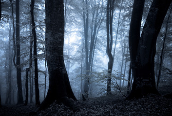 Autumn foggy forest at night