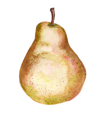 Watercolor Chinese pear