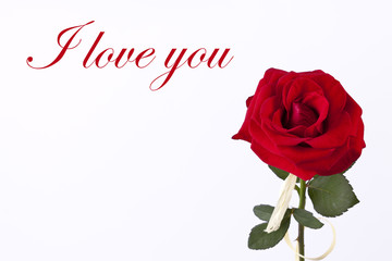 Simple love card with red rose on the white background