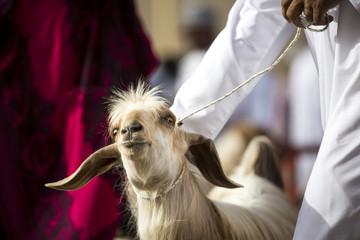 goat at Nizwa market