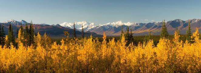 Wall Mural - Blazing Yellow Fall Autumn Color Tress Denali Mountain Range