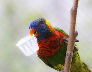 Portrait of parrot - rainbow lorikeet