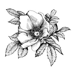 Graphic the branch flower dog rose names: Japanese rose, Rosa rugosa. Black and white outline illustration.