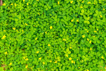 Green plant leaves background.