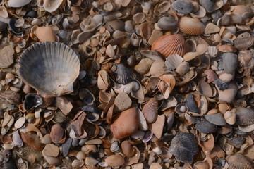 Hundreds of sea shells on sandy beach beach, macro