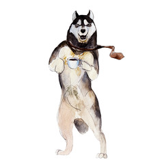 The husky dog with cup of coffee, watercolor illustration in hand-drawn style.