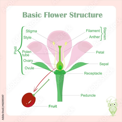Scheme of basic flower structure learning biology stock vector scheme of basic flower structure learning biology stock vector illustration ccuart Image collections