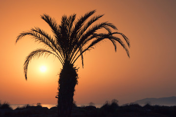 Palm tree on the coast in backlit sun at dawn.