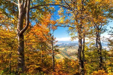 Trees in the forest in bright fall colors.