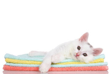 Fluffy white kitten laying on colorful orange, teal and yellow blankets stacked, paw over the side looking slightly to viewers left. Isolated on white background.