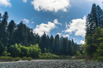 Fotomurais - A forest river on a sunny day.