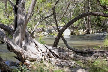 Beautiful scenic view of Emerald Creek