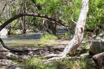 Scenic view of Emerald Creek