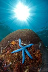 Underwater  Landscape Indonesia
