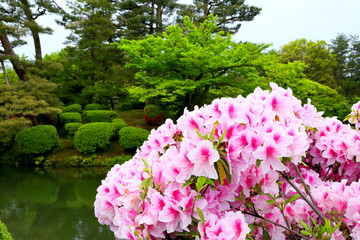 ツツジと日本庭園 Azalea and Japanese garden