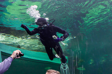 Diver cleaning the glass and the hand of the photographer in a large city aquarium . Interesting image  to drawing  and design websites on the nature and operation of aquariums .