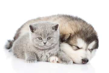 Kitten with sleeping puppy. isolated on white background