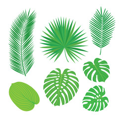 Set of tropical leaves. Sketch, design elements. Vector illustration