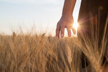 Ragazza sta accarezzando delle spighe di grano in un campo al tramonto