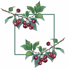 Cherry watercolor drawing illustration. Isolated hand drawn berry on white background. Summer fruit sketch. Detailed vegetarian food. Red cherries on a branch