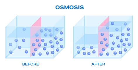 osmosis infographic vector