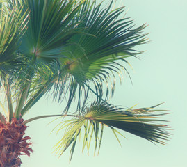 Palm trees against sky. retro style image. travel, summer, vacation and tropical beach concept