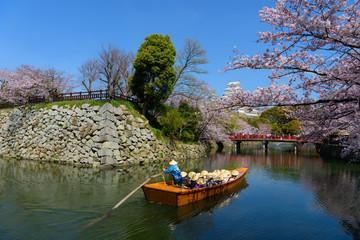 兵庫 姫路城天守閣と桜