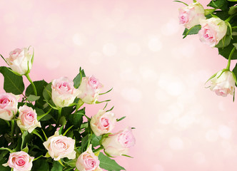 Background with white rose flowers