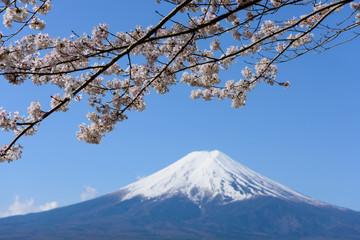 山梨 富士山と桜
