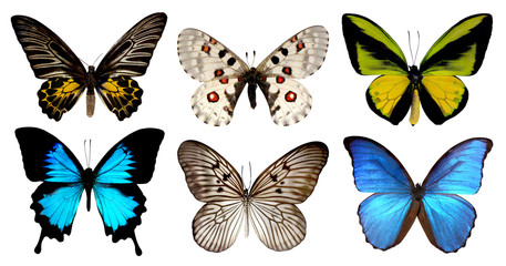 Set of six butterfly isolated on white background with clipping path, yellow green blue wings insects