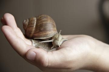 Snail ahatin in hand
