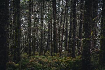 Wall Mural - Lush dark forest.