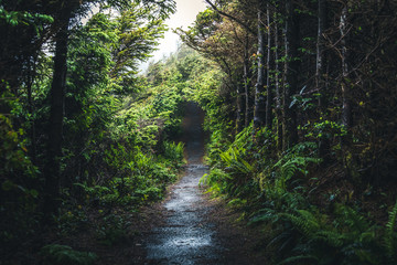 Wet forest trail.
