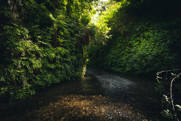 Wall Mural - Calm flow into Fern Canyon, California, USA.