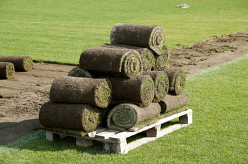 Laying of a grass rolled lawn at stadium