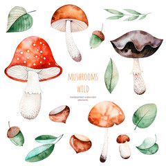Bright collection with autumn leaves,flowers,branches,acorns,multicolored  mushrooms, chestnut.Colorful autumn collection with 15 watercolor elements.Autumn collection.Perfect for your creation