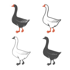 Geese isolated on white background