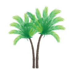 Palm Trees on White Background | Holiday Vector Design