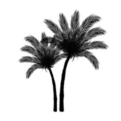 Black Palm Tree Silhouette on White Background | Vector Design