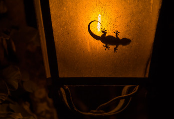 A little gecko sitting inside a street lamp and makes a nice silhouette.