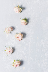 beautiful spray roses, pink flowers vertically with edge, texture, on a white variegated gray background, close-up