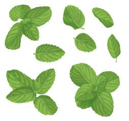 Mint leaf set