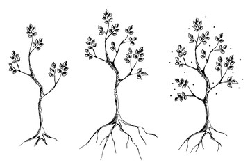 Vector set of hand drawn illustrations, decorative ornamental stylized tree. Graphic illustrations, black and white sketch. Decorative artistic ornamental hand drawing silhouette.