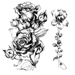 Hand drawn botanical art isolated on white background. Floral illustration. Flowers drawing vector illustration and line art.