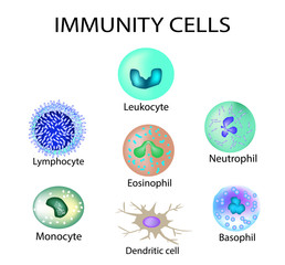 Cells of immunity. Set. Leukocyte, lymphocyte, eosinophil, neutrophil, monocyte, basophil, dendritic cell. Vector illustration on isolated background.