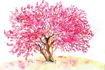акварель .дерево сакуры