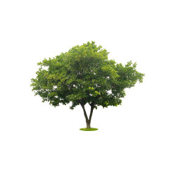 beautiful green tree isolated on white with clipping path