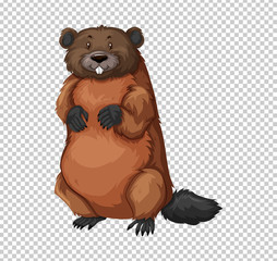 Beaver on transparent background
